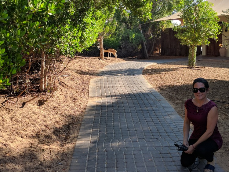 Walking around the resort trying to take a photo with a Gazelle