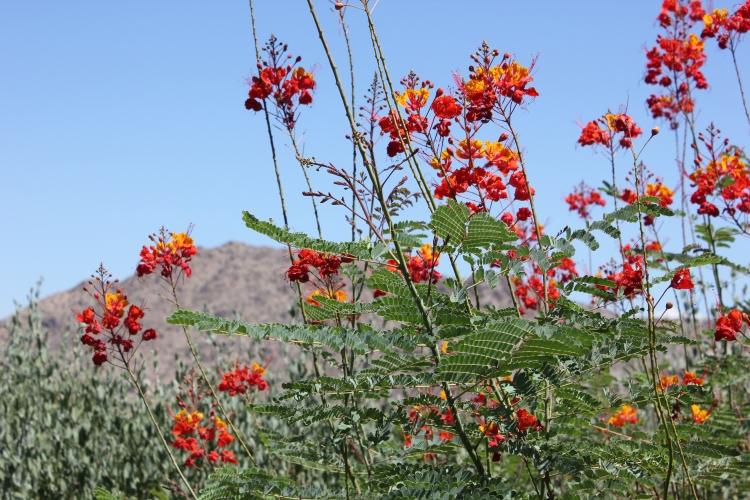 Desert flowers at The Sanctuary Camelback Resort