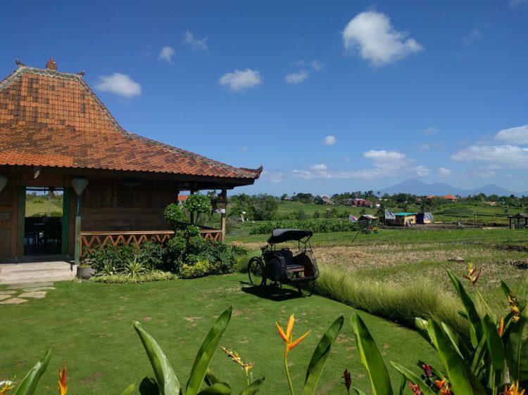 Rice field in Canggu