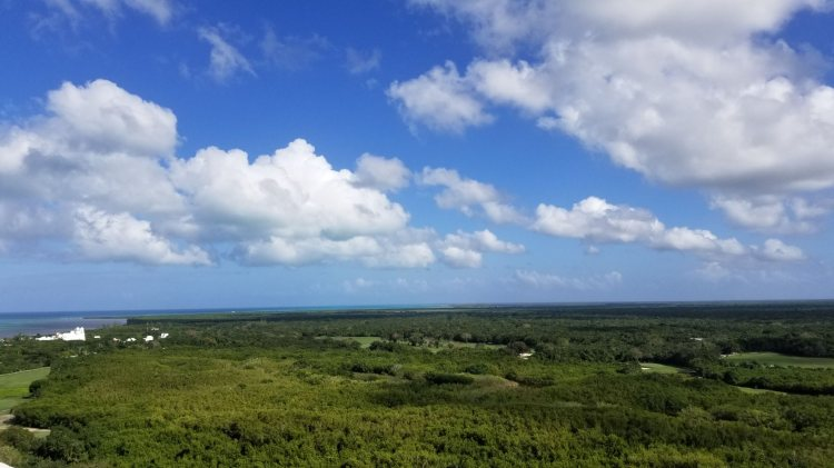 View of the jungle from the Weston Cozumel