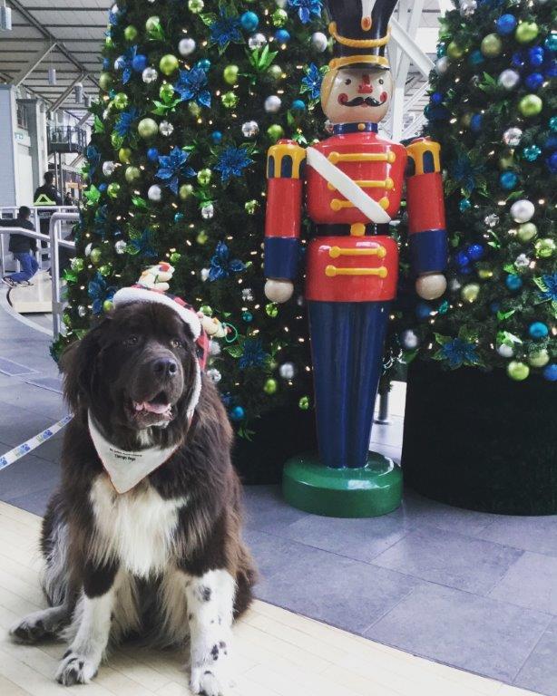 Ambassador dog at YVR