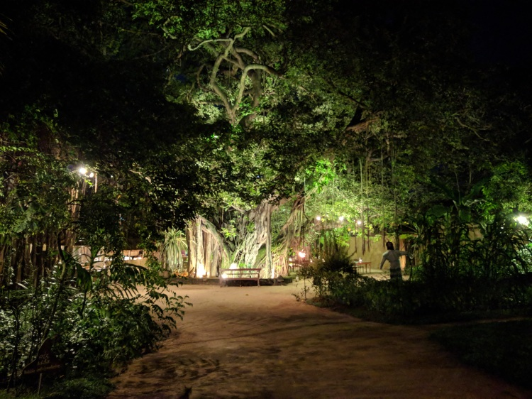Nuga Gama Tree