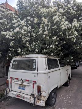 A van parked under a tree in Guadalajara