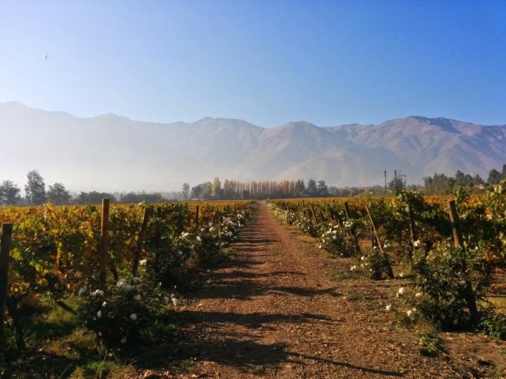 Viña Aquitania Santiago Chile Vineyard