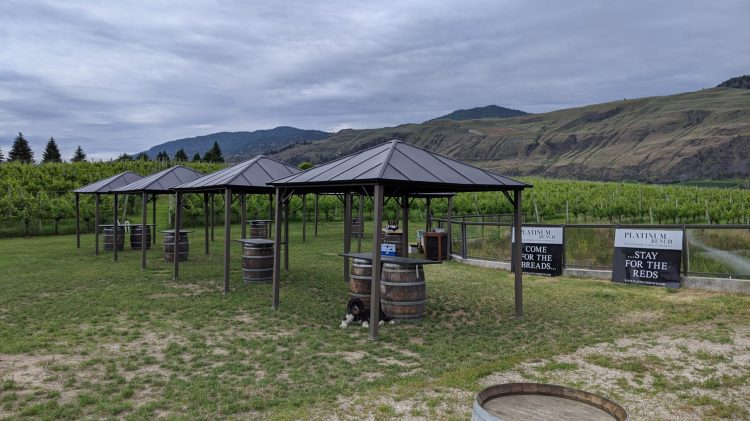 Platinum Bench's Wally, in the wine tasting area setup for the summer