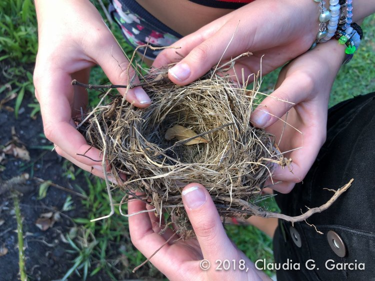 Nest in Nature by Claudia G. Garcia