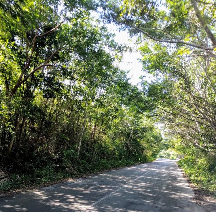 Driving towards Playa Palancar