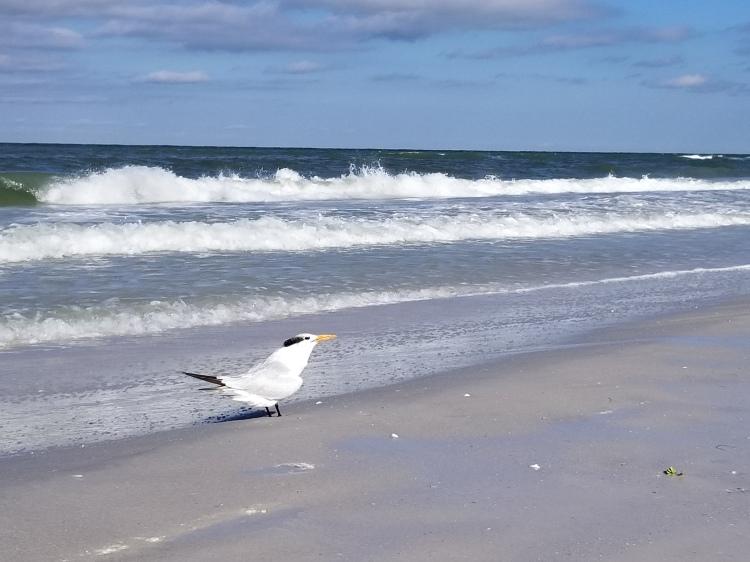 Bird on Clearwater Beach