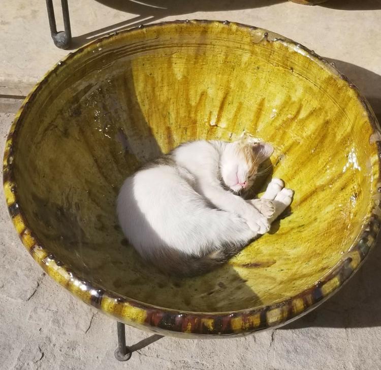 A cat enjoying the warm sun in the medina