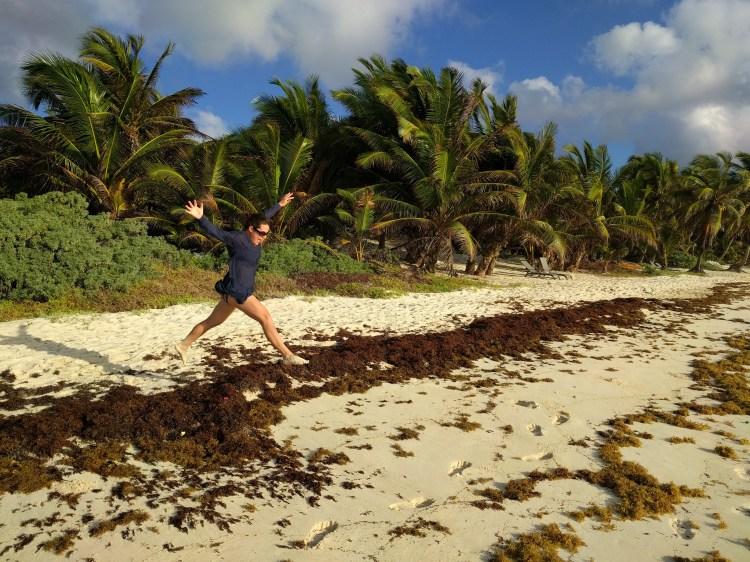 Sargassum seaweed on the beach