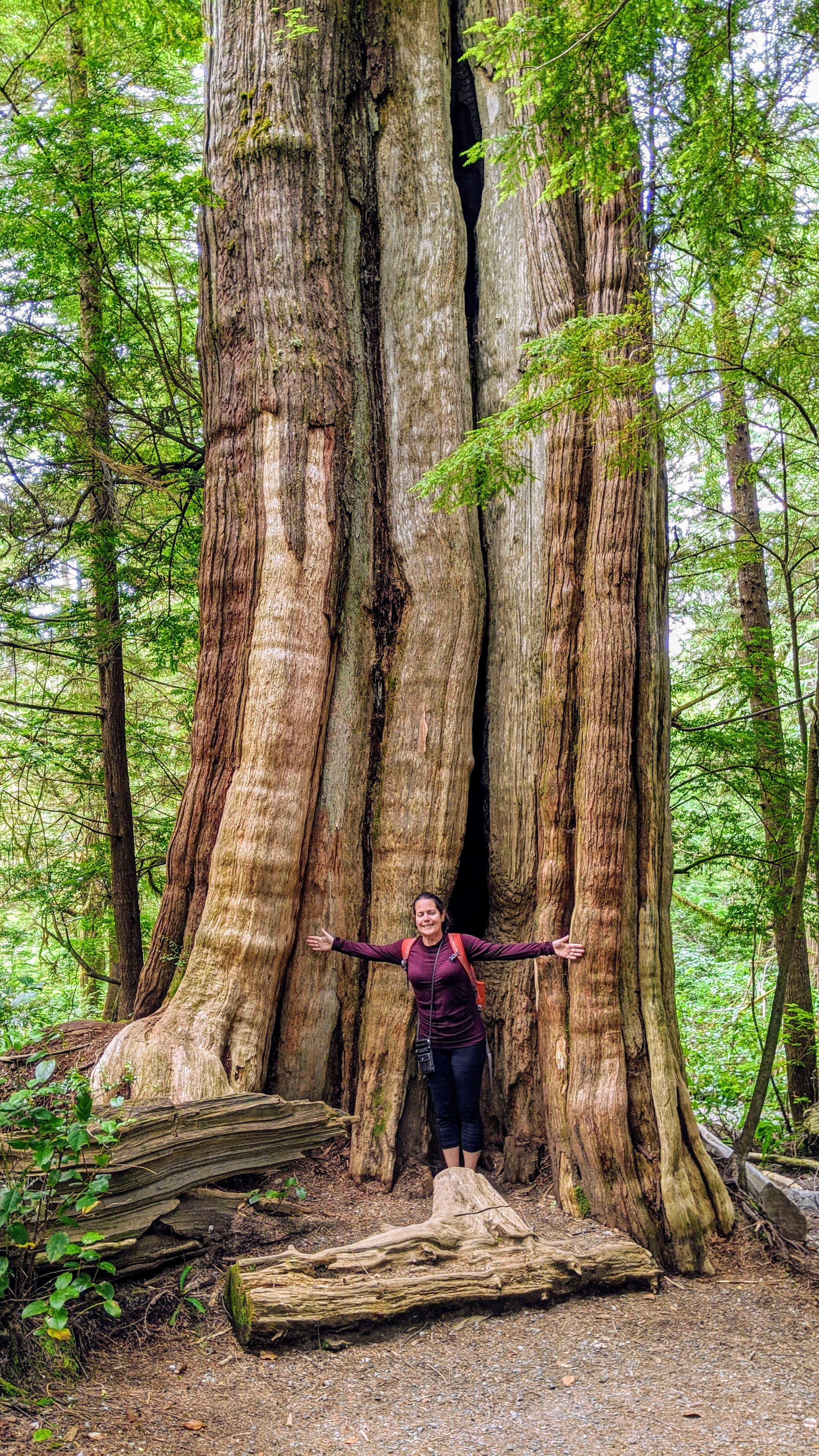 Max with one of the Ancient Cedars on the Wild Pacific Trail