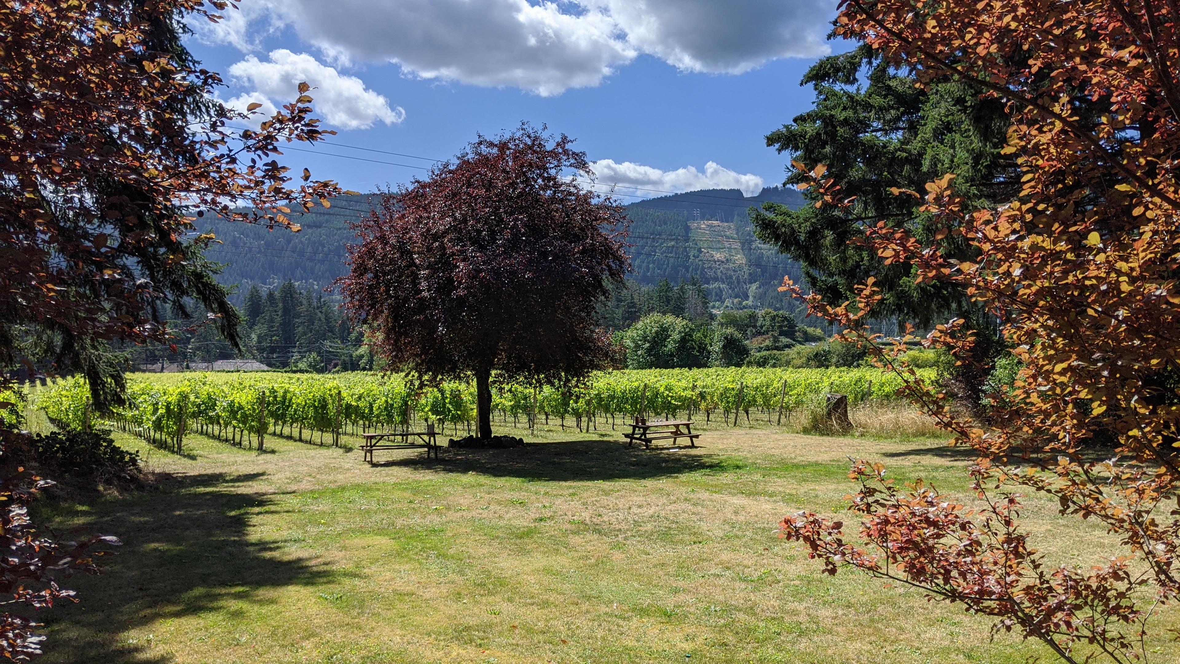 Kutatas Vineyard: wine tasting area