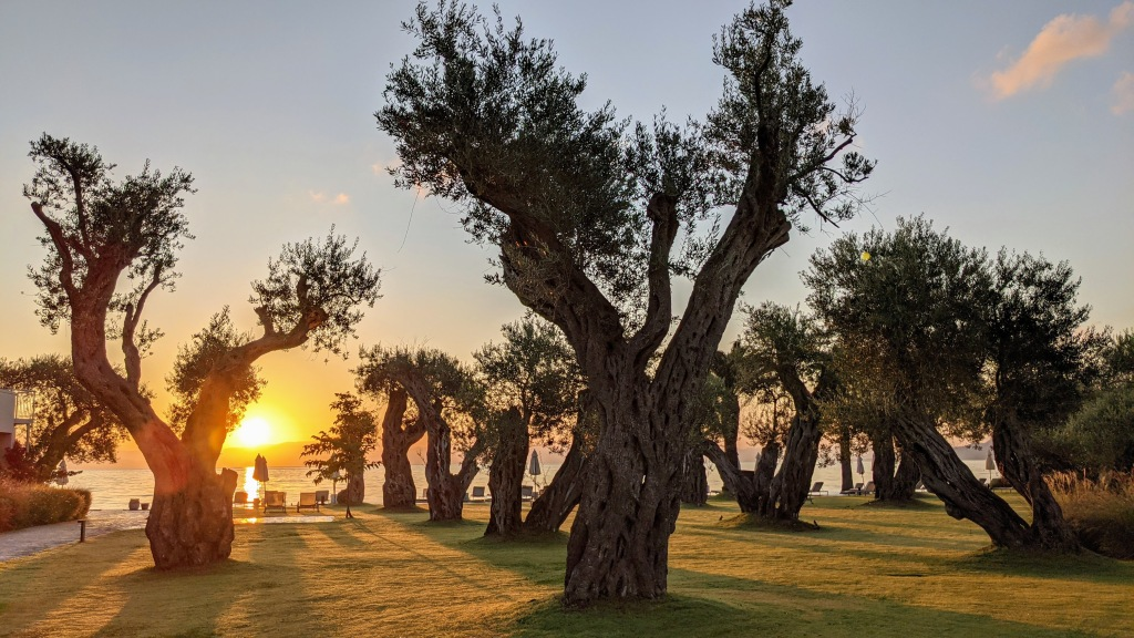 Domes Miramare Corfu Resort: Olive trees at sunrise