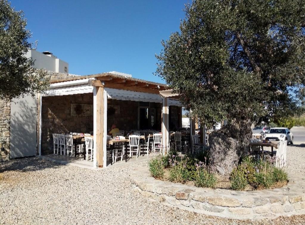 Friano Taverna: patio and an olive tree